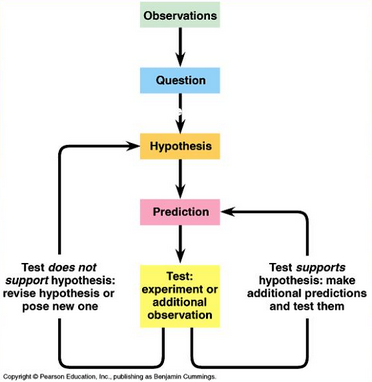 Observations lead to question leads to hypothesis leads to prediction leads to test. If test supports the hypothesis, make and test additional predictions. If test doesn't support hypothesis, make new hypothesis and test it.